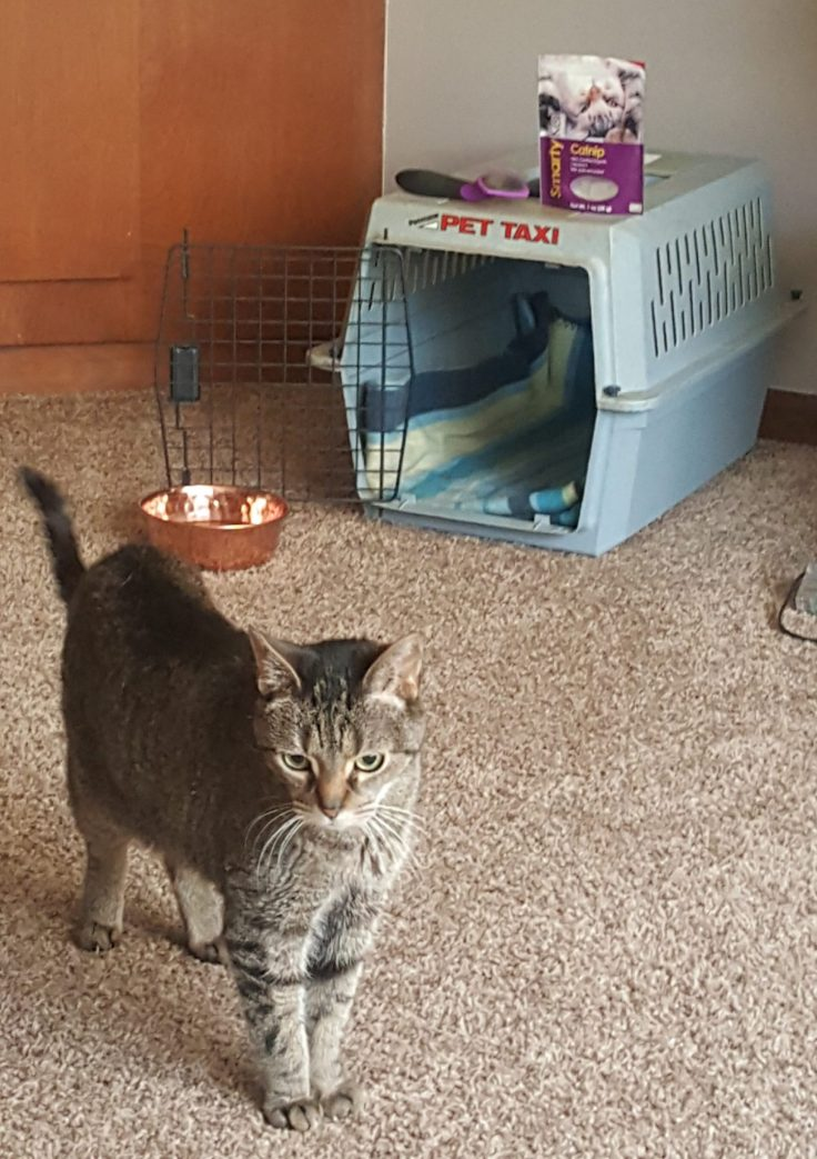 Cat Carrier in Living Room