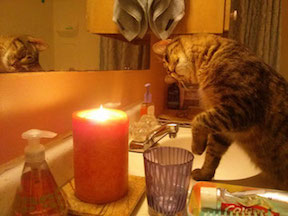 Cat Playing With Candle