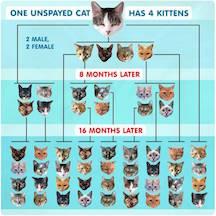 Cat Birthing Chart