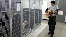 Chad Olds Singing to Shelter Dogs