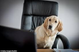 Dog Staring At Computer