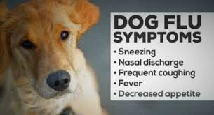 Dog Flu Symptoms