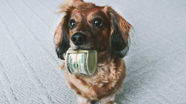 Dog with Money in Mouth