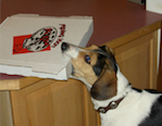 Dog Grabbing Pizza Box