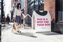 Dog Sidewalk Sanctuary