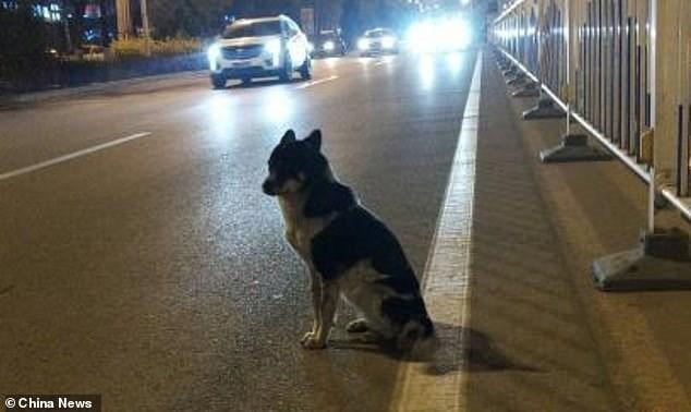 Dog Waits For Dead Owner