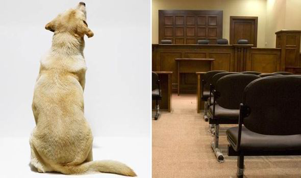 Dog in Court