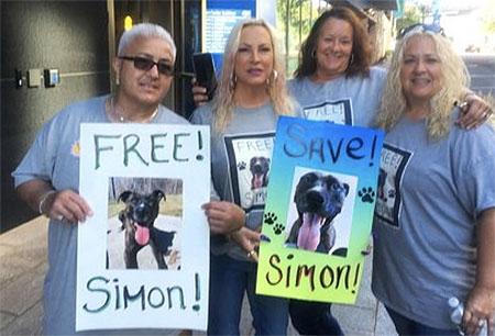 Dr. David Young explains his fight to get his dog Simon off of death row