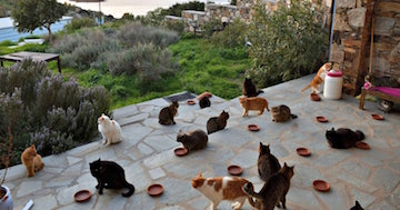 Greek Cat Rescue