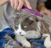 Woman Grooming Cat