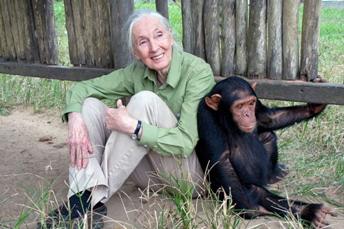 Dr. Jane Goodall is on Animal Radio