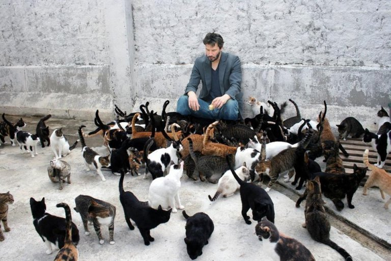 Keanu Reeves with Cats