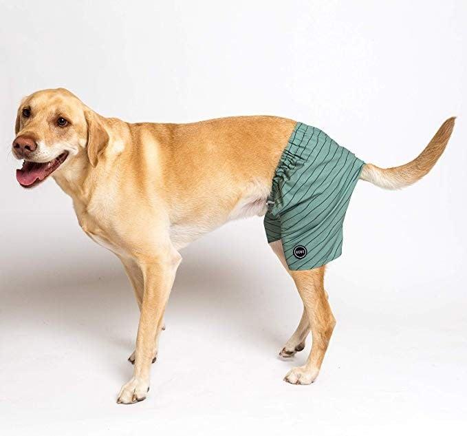 Kove Dog Swim Trunks