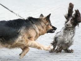 Dog Exhibiting Leash Aggression