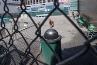 NY Dog Park
