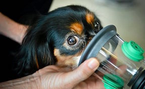 Pet Oxygen Mask Used on Dog