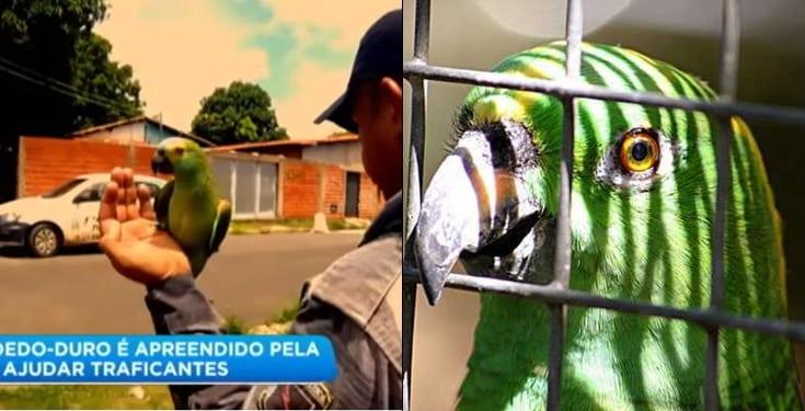 Police Take Parrot Into Custody