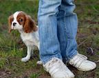 Shy Dog, Shy Owner?