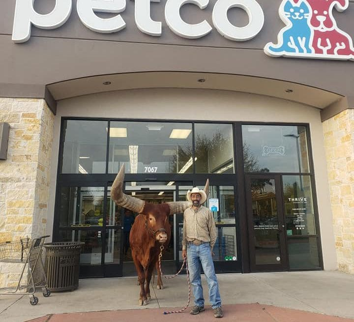 Oliver The Steer at Petco