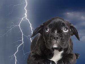 Dog and Thunder