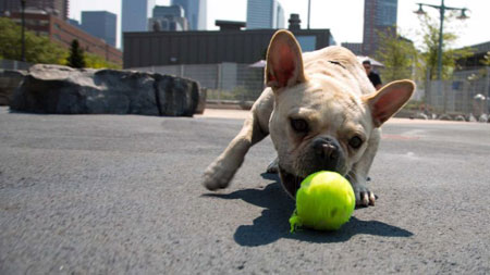 Tribeca Dog Park Gets Hijacked For Ten Years