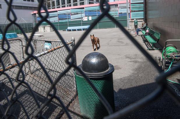 Tribeca Dog Park