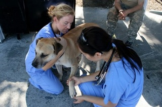 Veterinarians Caring For Homeless Dog