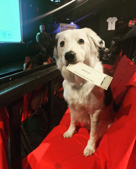 Dog in Theater