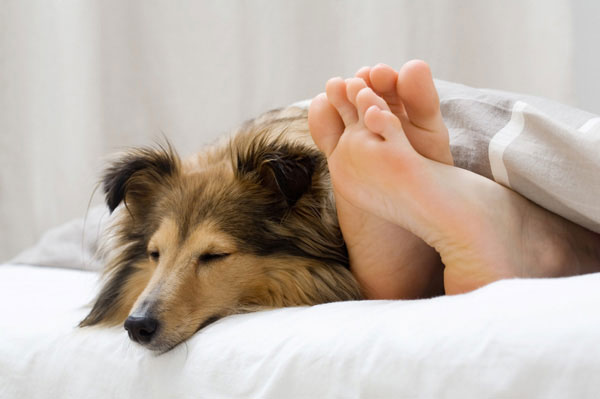 Women prefer sleeping with dogs to humans