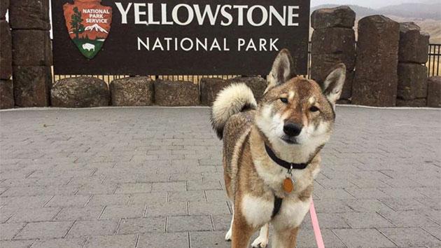 Mura at Yellowstone